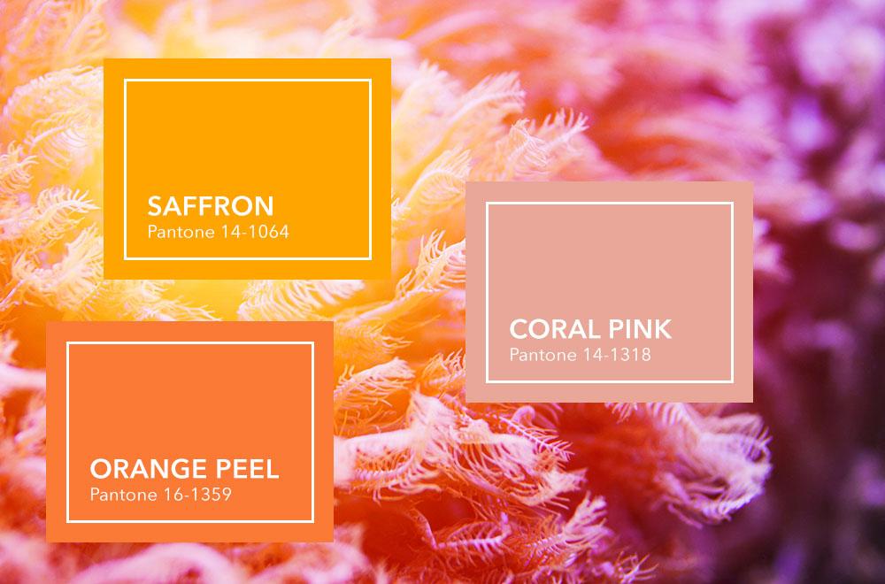 Korallen im Meer mit Farbkacheln im Vordergrund: Saffron, Orange Peel und Coral Pink